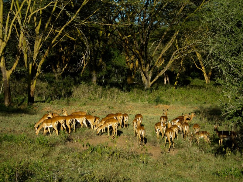 Lake_Nakuru_11-2