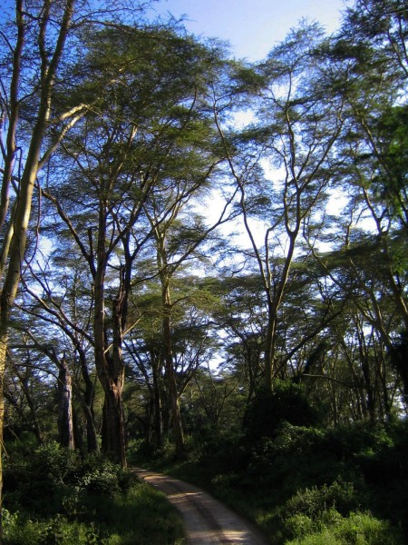Lake_Nakuru_23-2