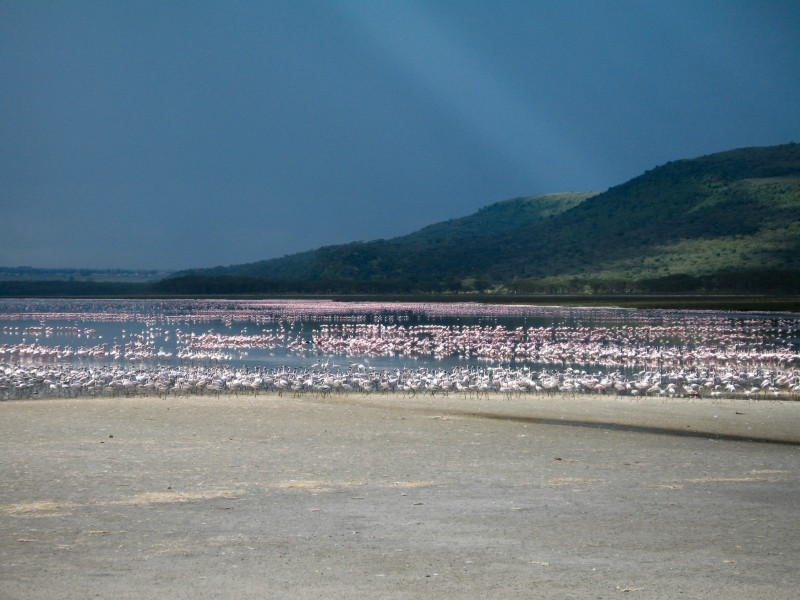 Lake_Nakuru_6-2