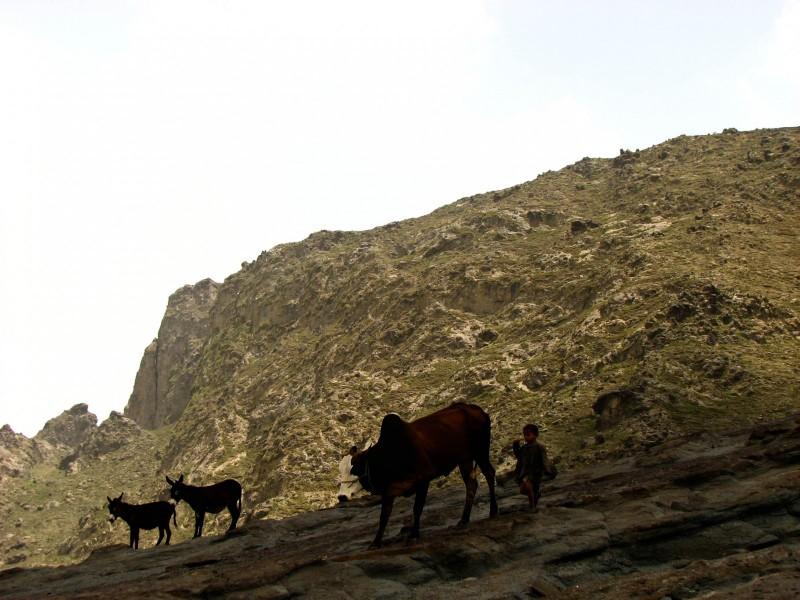Haraz-Mountains-North-13-2