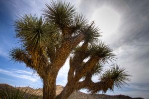 Joshua Tree National Park, 2013