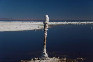 Salton Sea, 2014