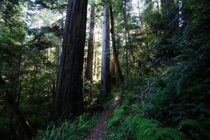 Jedediah Smith Redwoods State Park, 2015