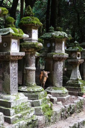 Nara, 2017