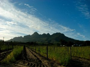 near Stellenbosch, 2008
