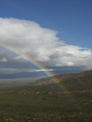 Great Karoo, 2008