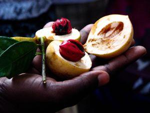 Zanzibar, 2009- nutmeg