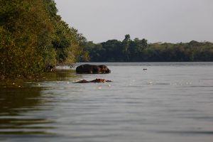 Lake Mburo, 2015