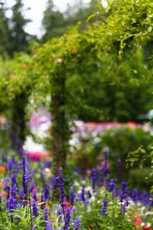 Butchart Gardens, British Columbia, 2019