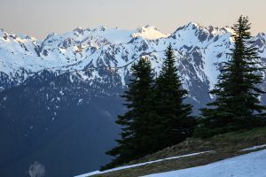 Hurricane Ridge, Olympic Peninsula, 2017
